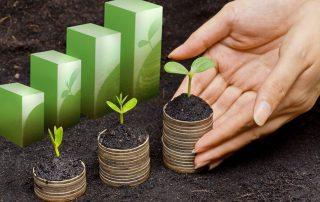 Jeunes pousses végétales symbolisant des entreprises en croissance